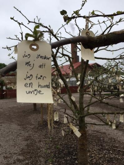 Önsketräd i Wanås